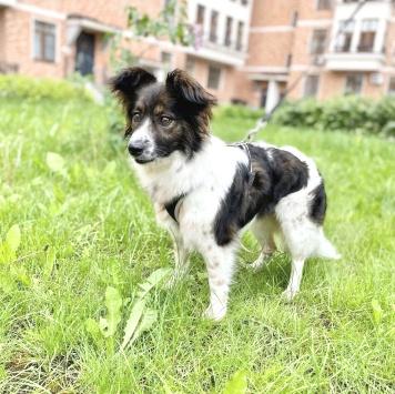 Люся - Собаки в добрые руки