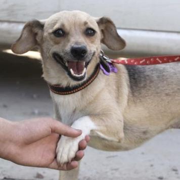 Федот - Собаки в добрые руки