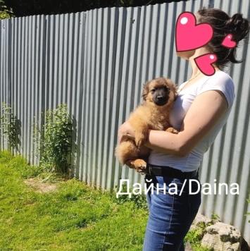 Дайна - Собаки в добрые руки