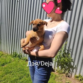 Дэя - Собаки в добрые руки