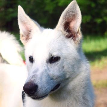 Шерри - Собаки в добрые руки