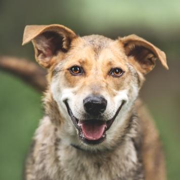 Фруня - Собаки в добрые руки