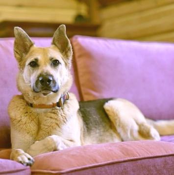 Цесса - Собаки в добрые руки