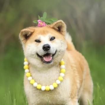 Харуко - Собаки в добрые руки