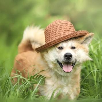 Самурай - Собаки в добрые руки