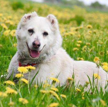 Лиана - Собаки в добрые руки