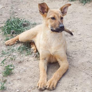 Пенни - Собаки в добрые руки