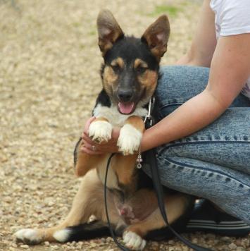 Нильс - Собаки в добрые руки