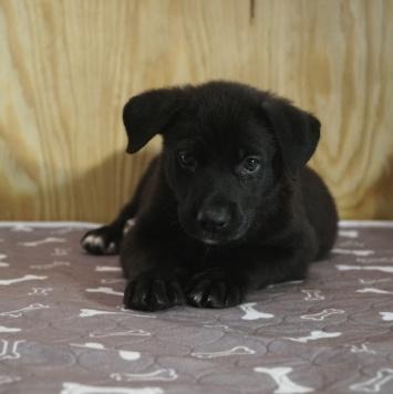 Солнышко - Собаки в добрые руки