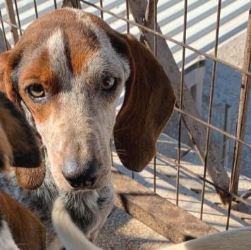 Спотти - Собаки в добрые руки
