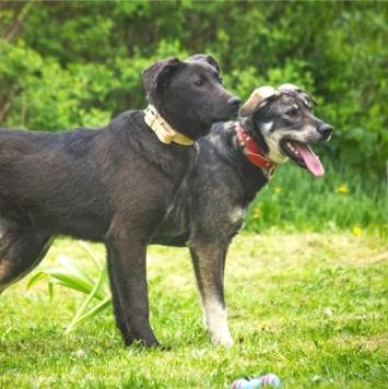 Соня и Тайсон - Собаки в добрые руки