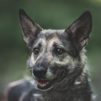 Лейла - Собаки в добрые руки