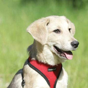 Серафима - Собаки в добрые руки
