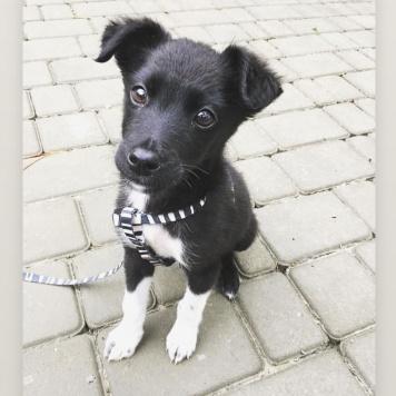 Тайган - Собаки в добрые руки