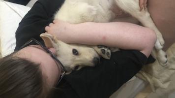 Ванби - Собаки в добрые руки