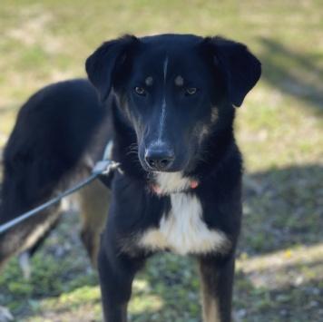 Черничка - Собаки в добрые руки