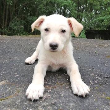 Вегас - Собаки в добрые руки