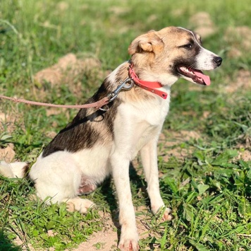 Сава - Собаки в добрые руки