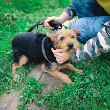 Ирис - Собаки в добрые руки