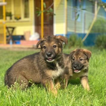 Проша и Тиша - Собаки в добрые руки
