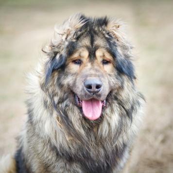 Берик Дондаррион - Собаки в добрые руки