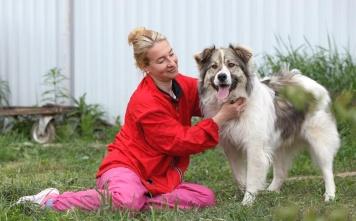 Теди - Собаки в добрые руки