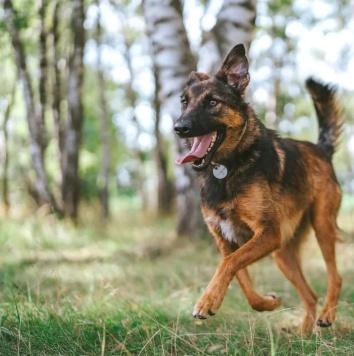 Зира - Собаки в добрые руки