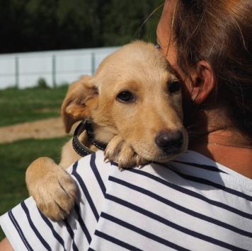 Щенок Пенни - Собаки в добрые руки