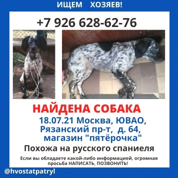 Изюма - Найденные собаки