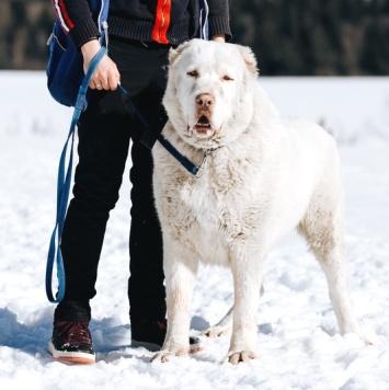 Эрос - Собаки в добрые руки