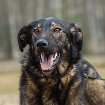 Юна - Собаки в добрые руки