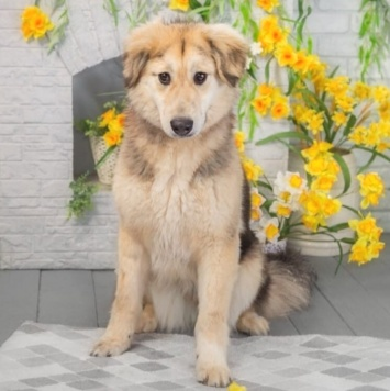 Бэтт - Собаки в добрые руки