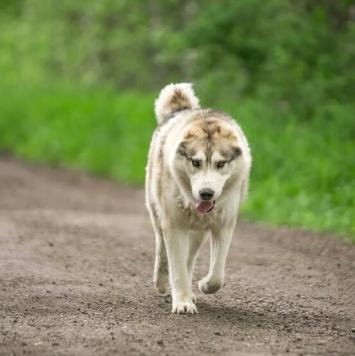 Бек - Собаки в добрые руки