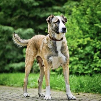 Альба - Собаки в добрые руки