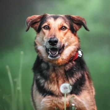 Тесла - Собаки в добрые руки