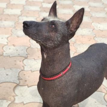 Лотос - Собаки в добрые руки