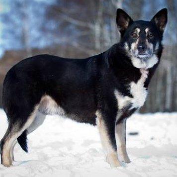 Блэк - Собаки в добрые руки