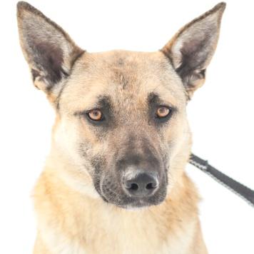 Кира - Собаки в добрые руки