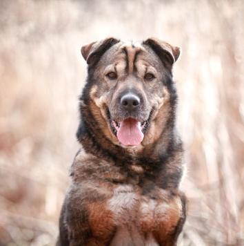 Бутя - Собаки в добрые руки