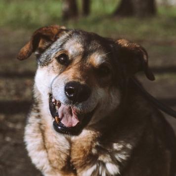 Март - Собаки в добрые руки