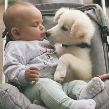 Митюша - Собаки в добрые руки