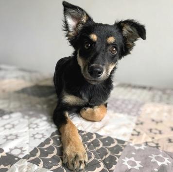 Самбука - Собаки в добрые руки