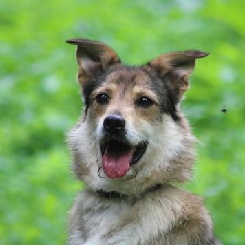 Шейла - Собаки в добрые руки