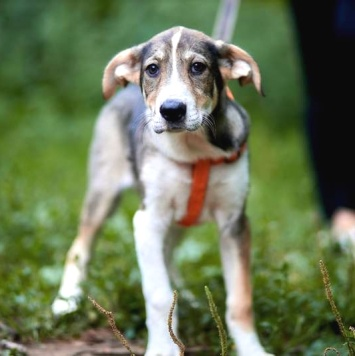 Тэфи - Собаки в добрые руки