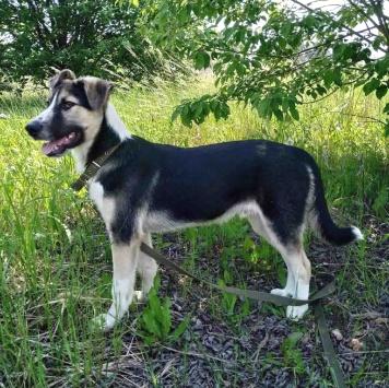Ерёма - Собаки в добрые руки