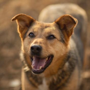 Адалия - Собаки в добрые руки