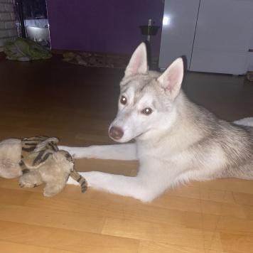 Тофи - Собаки в добрые руки