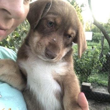 Noname - Собаки в добрые руки