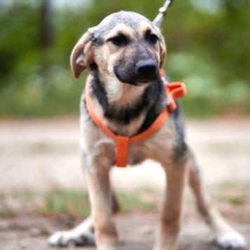 Тэдди - Собаки в добрые руки