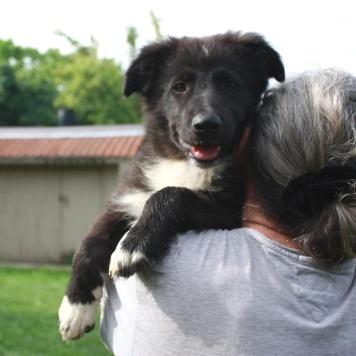 Женева - Собаки в добрые руки